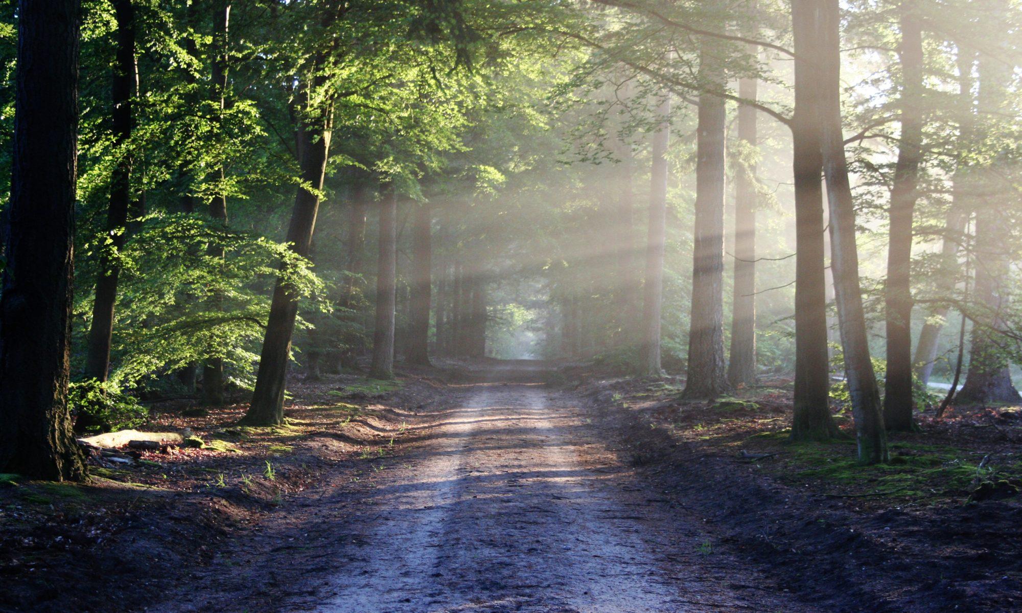 Chemins de Lumières